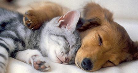 Moreno Valley: Pet Adoptions